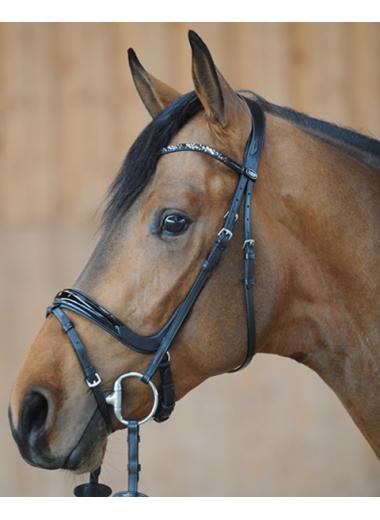 Kavalkade Ogłowie Ivana 24h pony